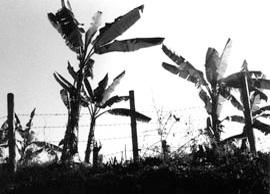 palmspic